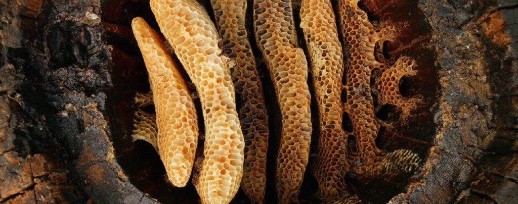 cire-abeille-le-temps