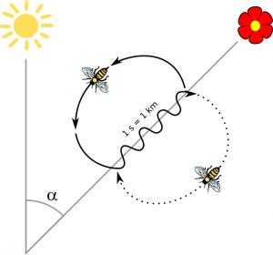 Danse-des-abeilles