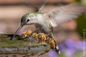 abeilles et colibris Toshiyasu Morita