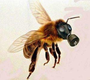 abeille-neonicotinoides
