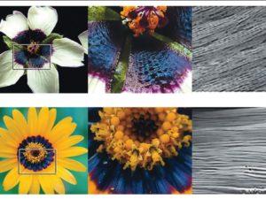 halo bleu fleurs abeilles