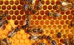 cire-abeille