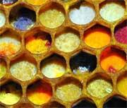 couleurs-pollen